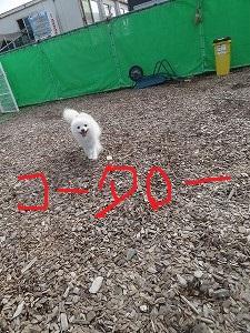 Dsc04874